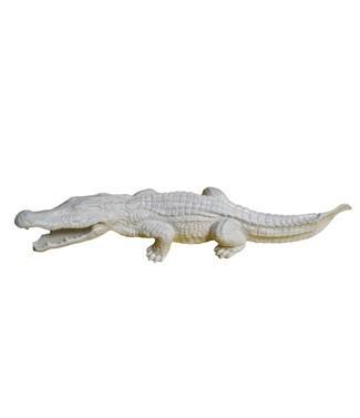 Crocodile Blanc L 116 x h 25