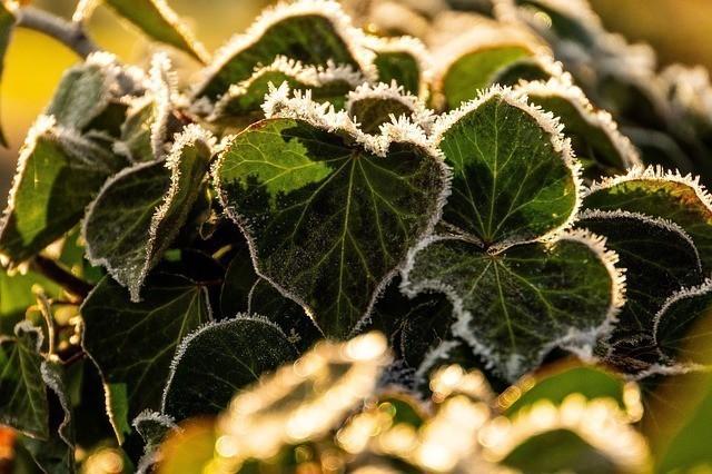 feuilles_gel