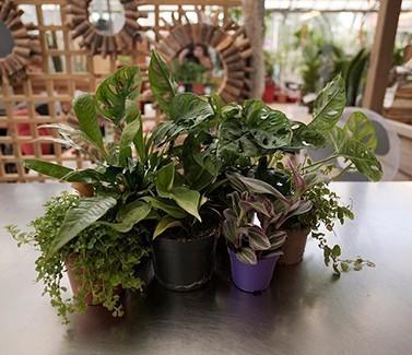 plantes intérieur promotion