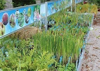 plantes_aquatiques