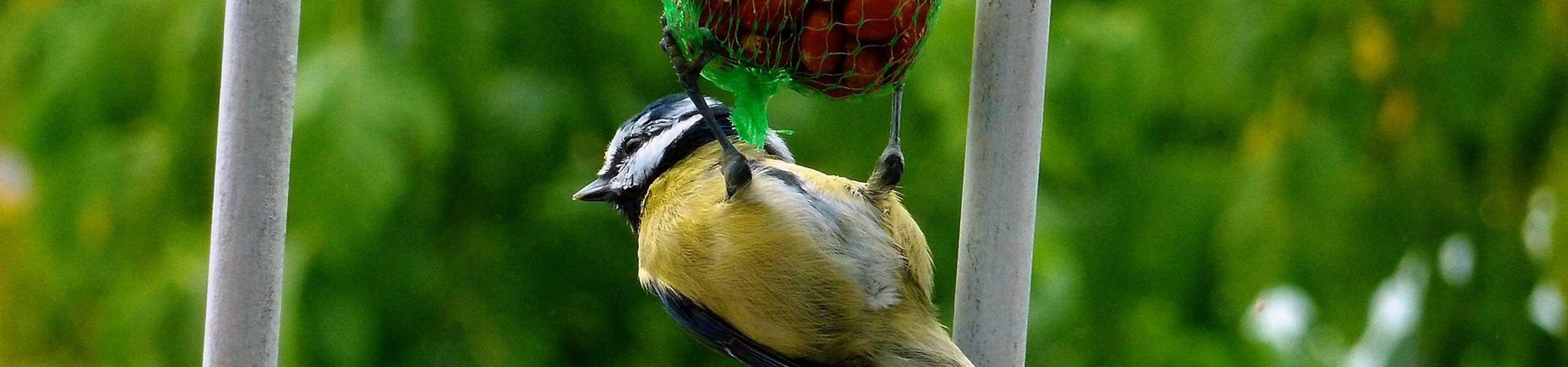 Aliment pour oiseaux