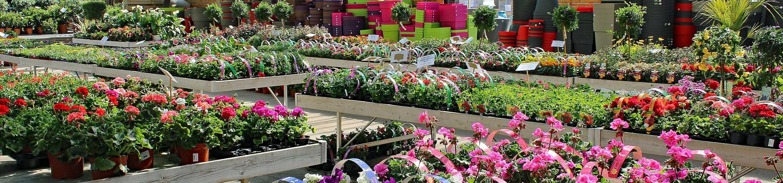 Marché aux fleurs sonofep