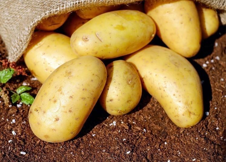 asperge_pommes_de_terre