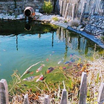 Bassin de la Sonofep