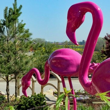 Flamants roses de la Sonofep