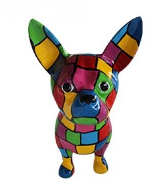 Chihuahua multicolore h 55