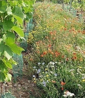 Mélange Sedamix® Vignoble fleuri 1 kg