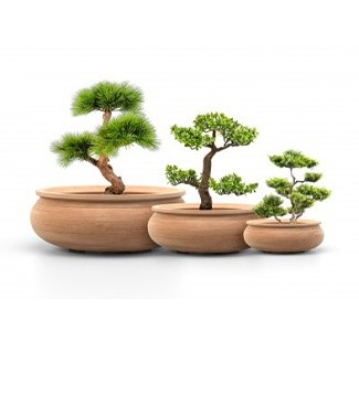 coupe_bonsai