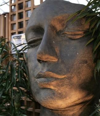 plante_intérieur_visage