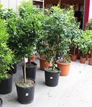 plante_med