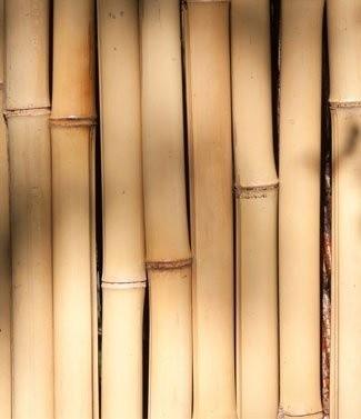 Bambou décoratif de jardin